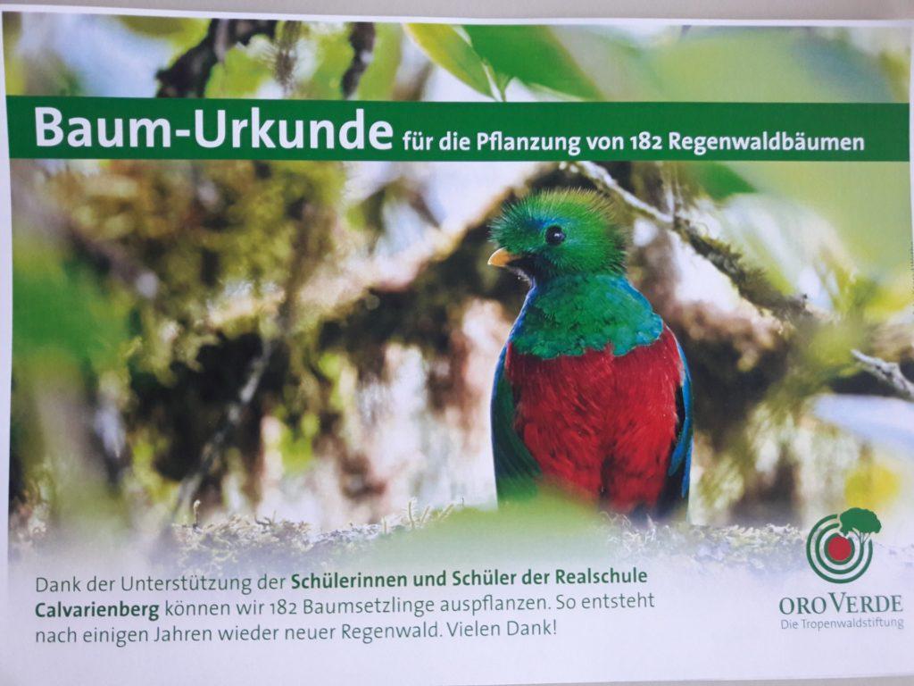 Der Calvarienberg lässt die Regenwälder wieder wachsen